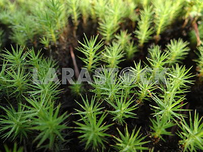 Green moss.