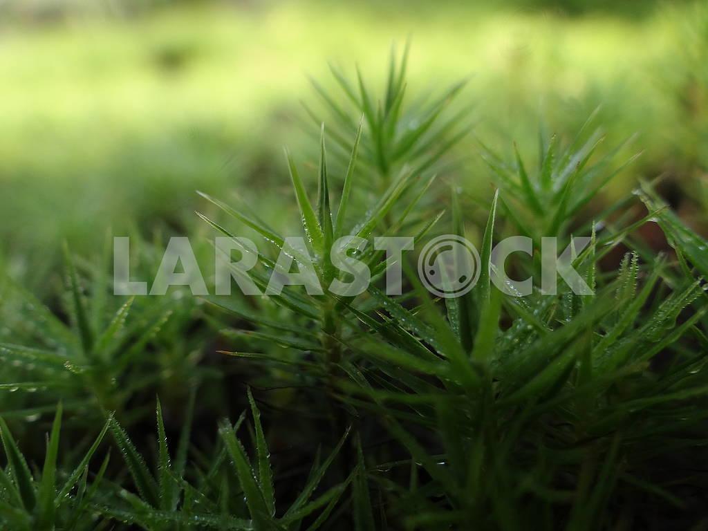 Green wet moss. Macro photography. — Image 66309