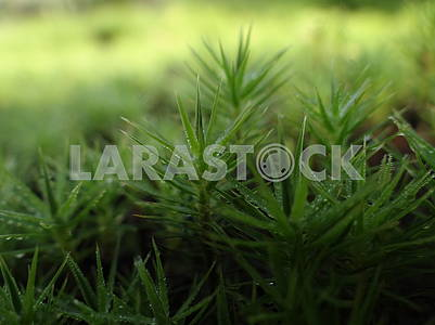 Green wet moss. Macro photography.