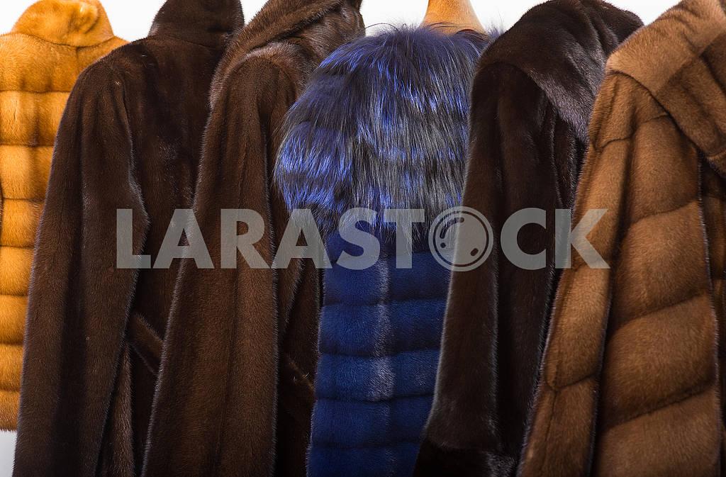 Fur coats — Image 66331