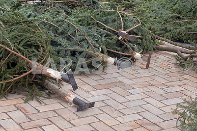 Fixture for Christmas tree branches
