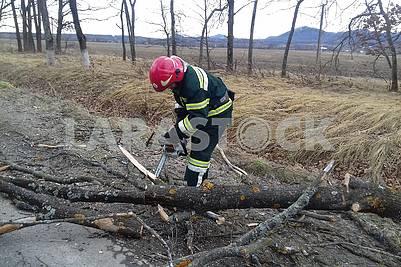 The lifesaver saws the fallen tree