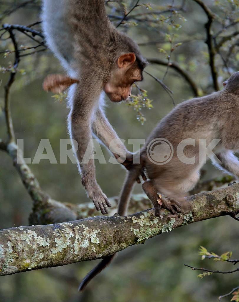 A monkey — Image 66611