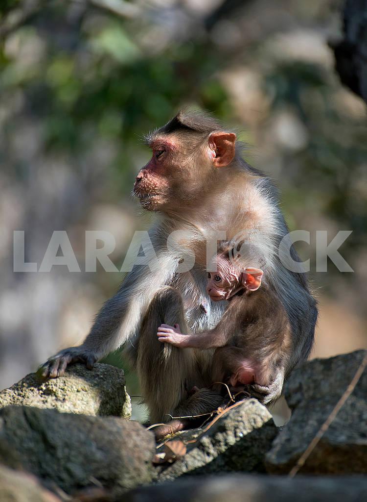 A monkey — Image 66622