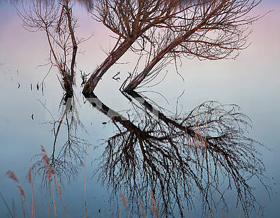 Reflection of a tree in water
