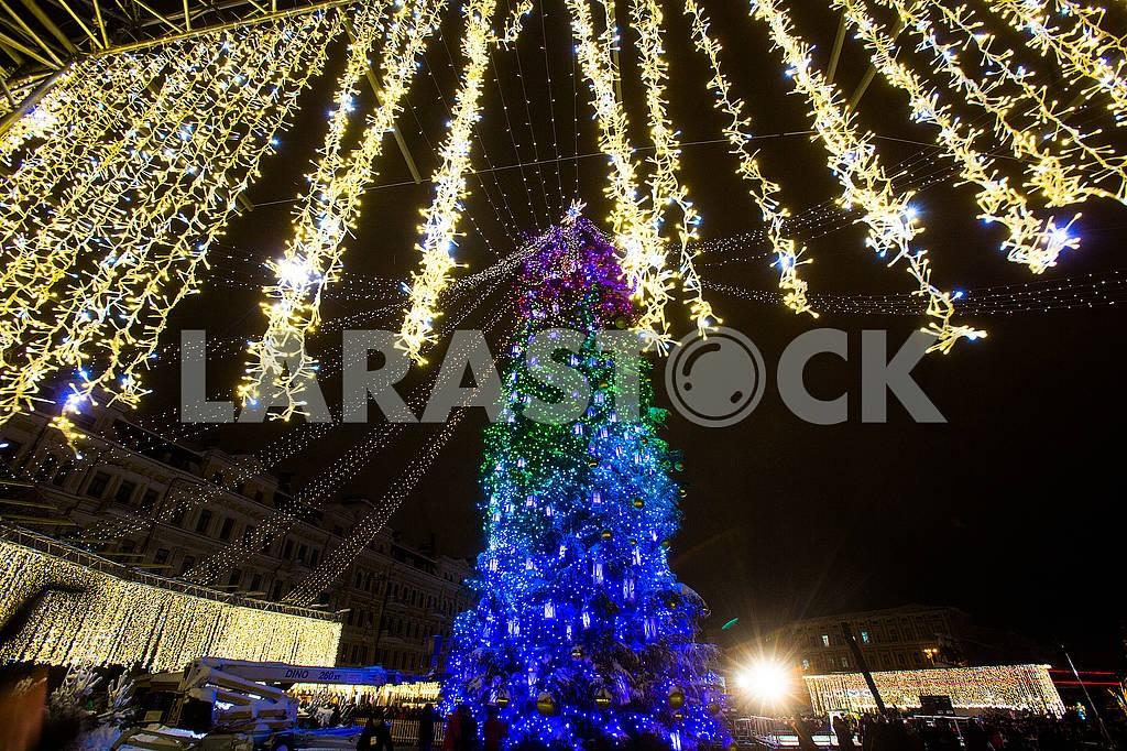 Главная елка страны — Изображение 66835