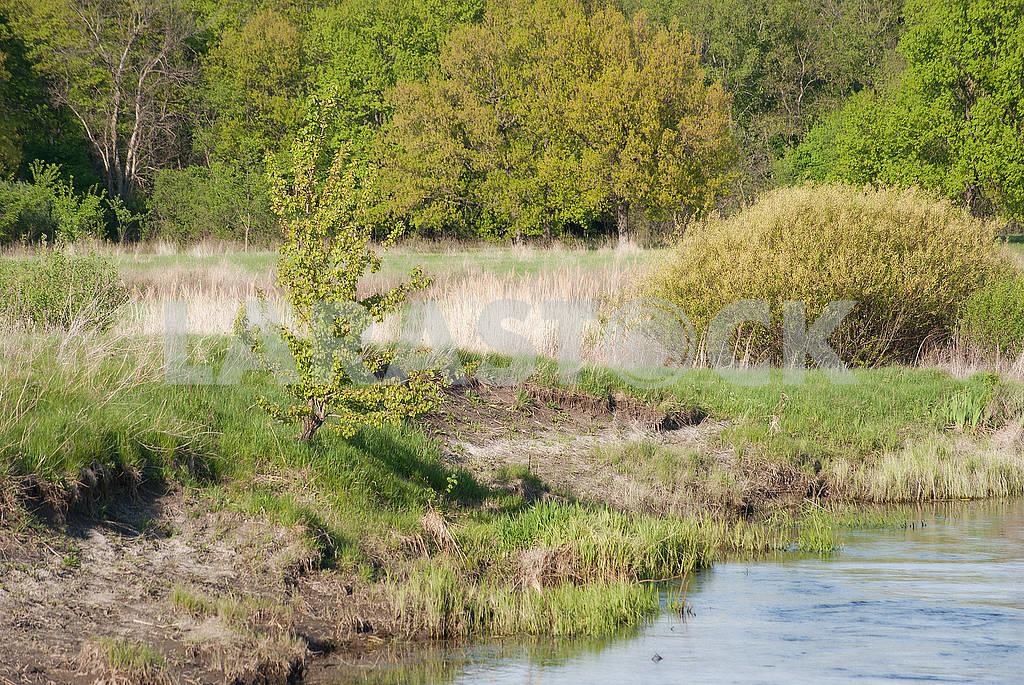 Spring landscape near the river — Image 66880