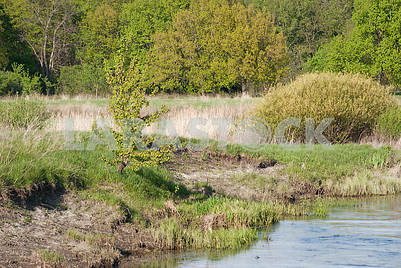 Spring landscape near the river