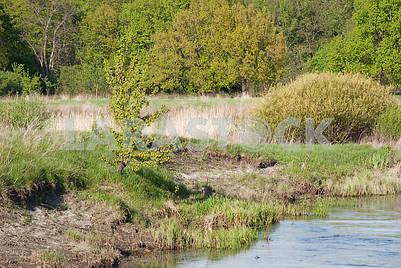 Spring landscape near the river