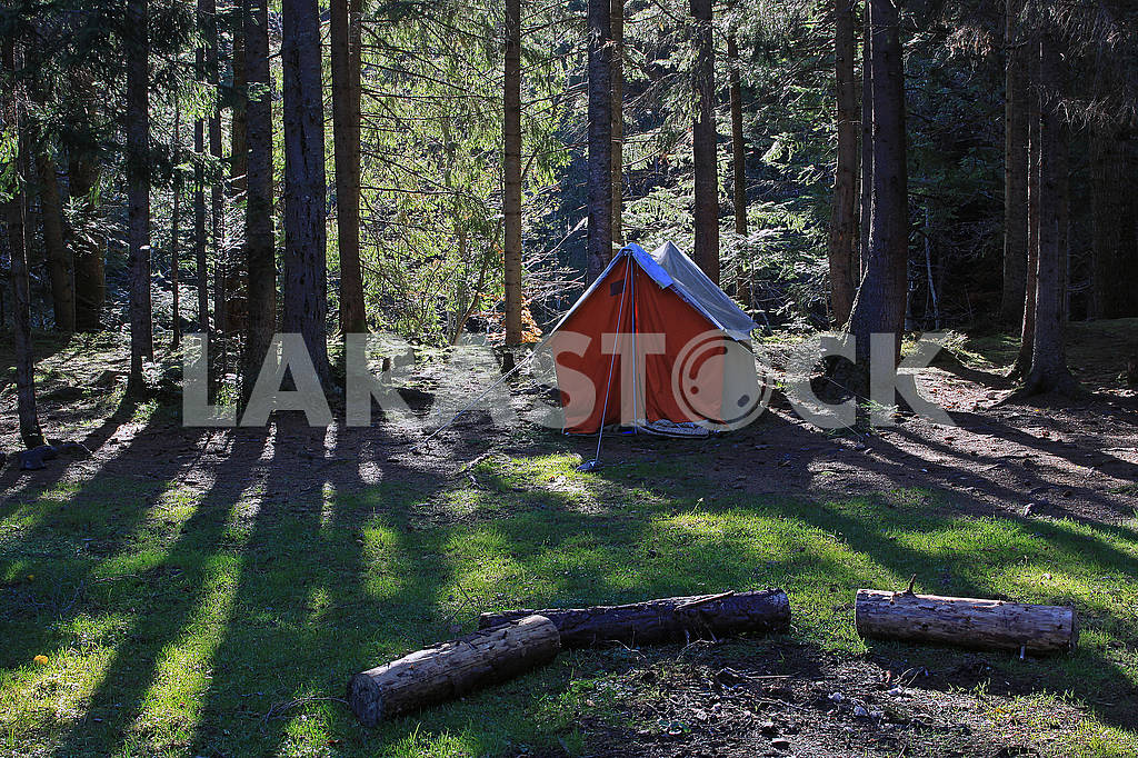 Tent in the coniferous forest — Image 67054