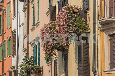 Flowers on the balcony in Verona