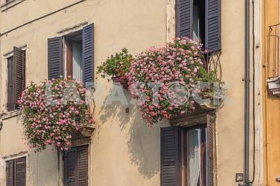 Цветы на балконе в Вероне