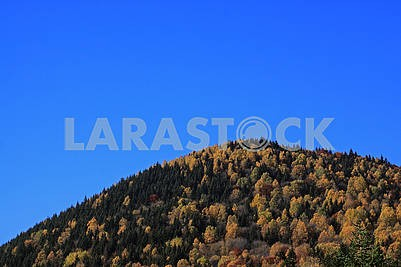 Autumn fall hillside and blue sky