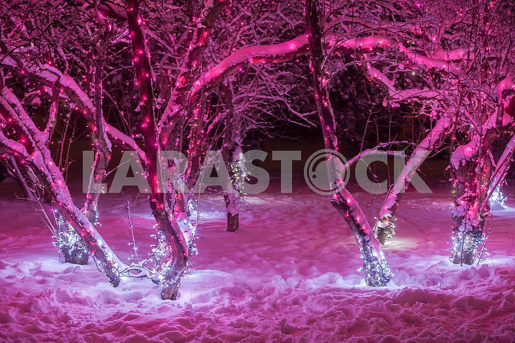 Illumination in the National Botanical Garden — Image 67640
