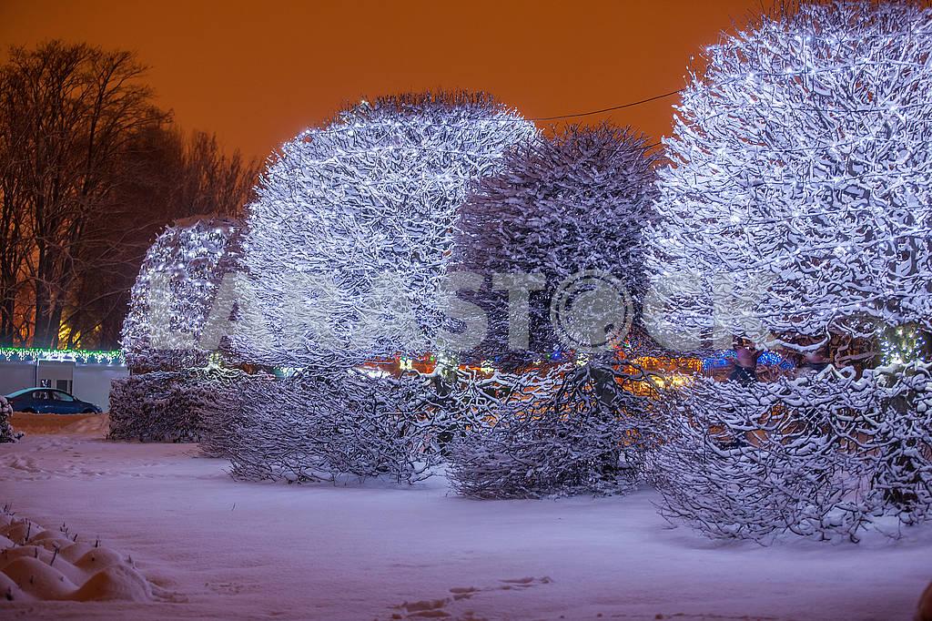 Illumination in the National Botanical Garden — Image 67641