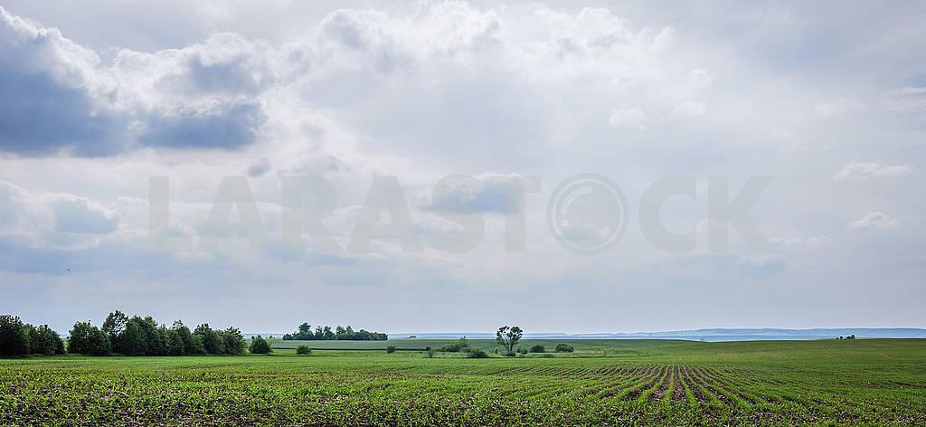 Cornfield — Image 67731
