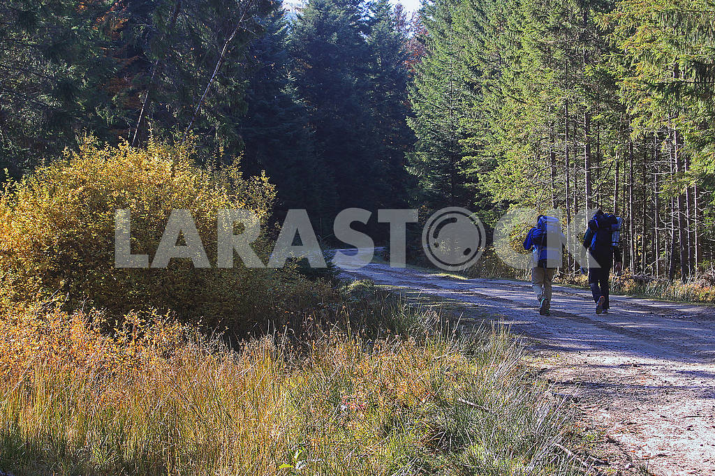 Tourists on the forest road — Image 67790