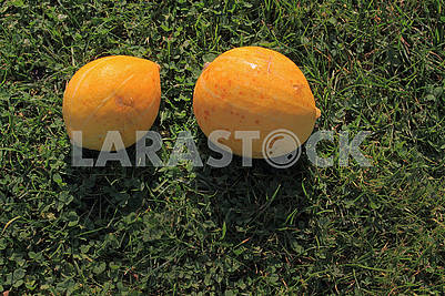 Two small pumpkins in the sun
