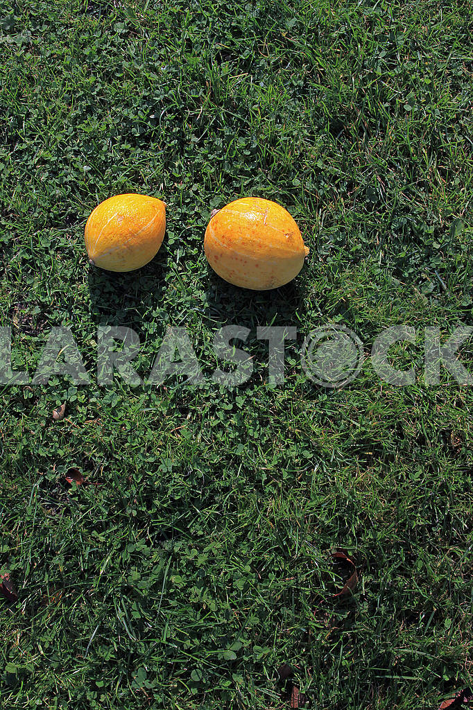 Two small pumpkins in the sun in the grass — Image 67862