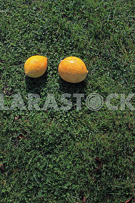 Two small pumpkins in the sun in the grass