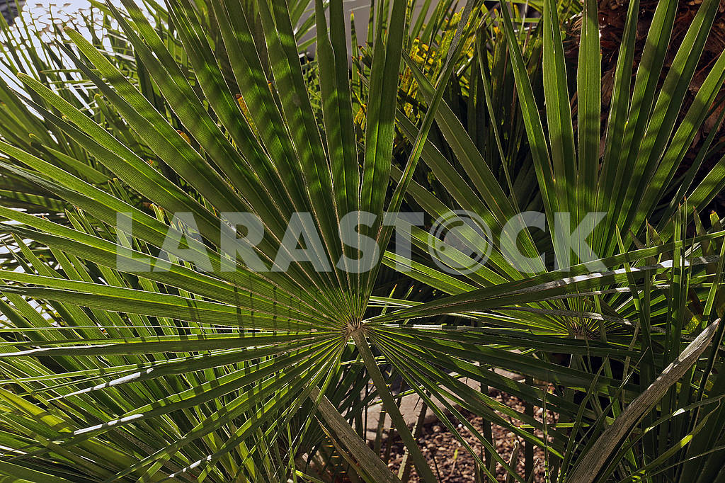 Green palm leaf — Image 67906