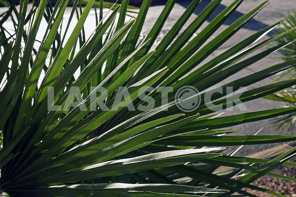 Green palm leaf for background — Image 67907