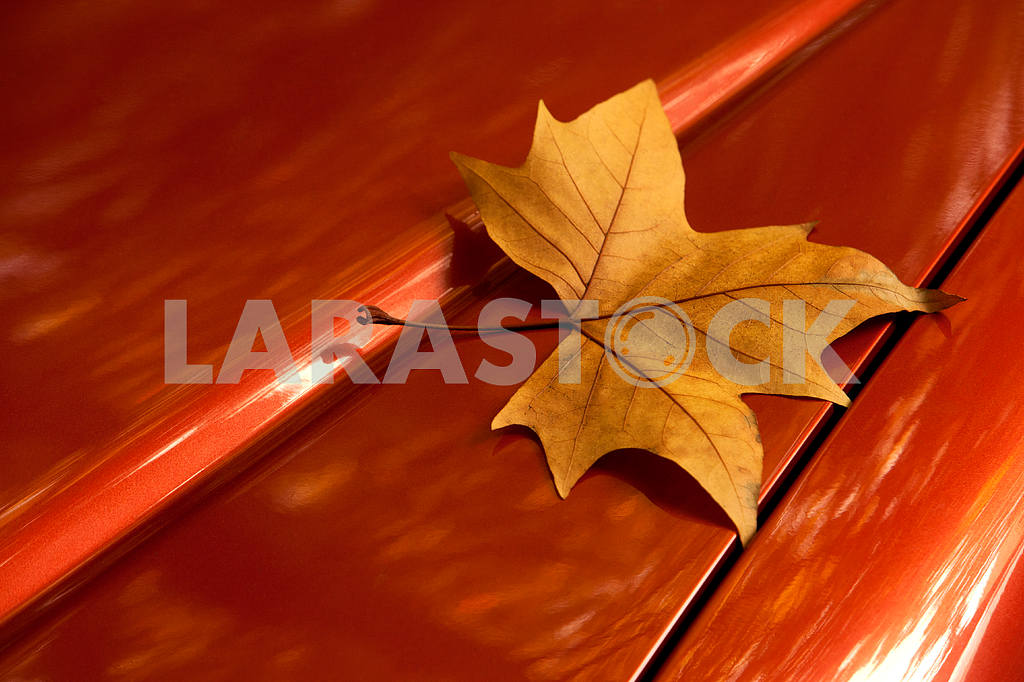 The golden autumn leaf on the car — Image 68