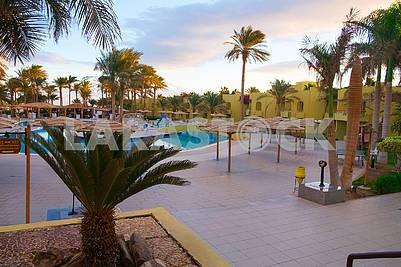 Пальмы и бассейн возле отеля