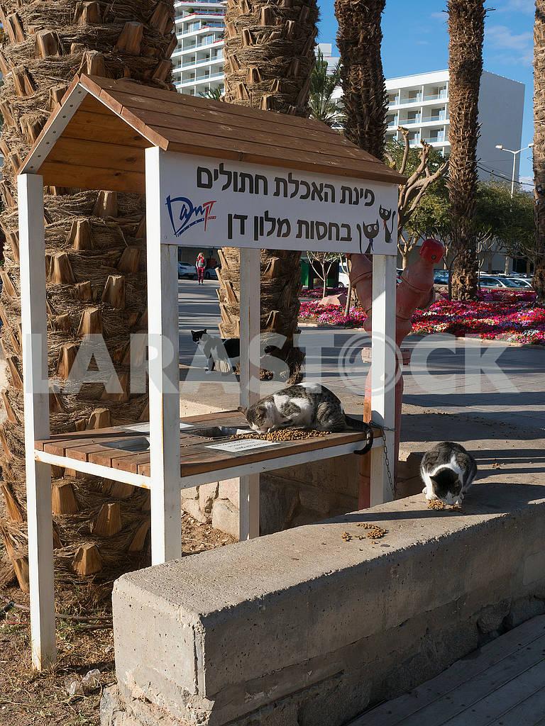 Cat Feeder in Eilat — Image 68110
