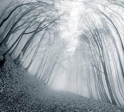 Буковый лес осенью