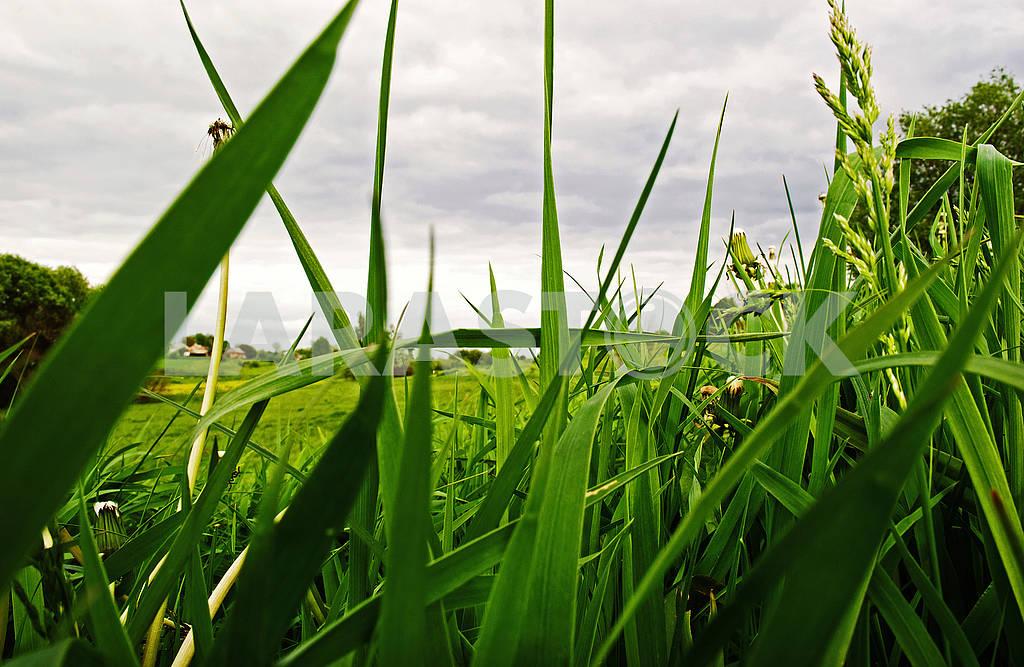 Трава — Изображение 68142