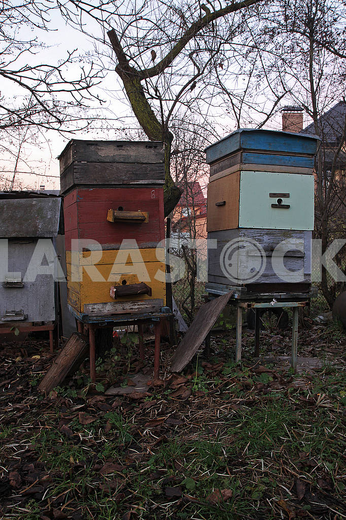 Three colored hive — Image 68233
