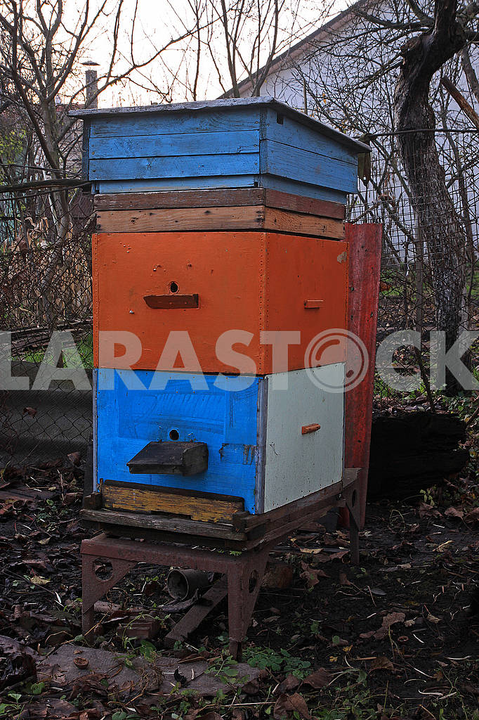 One colored hive — Image 68281