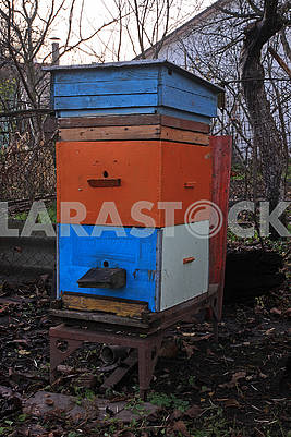 One colored hive