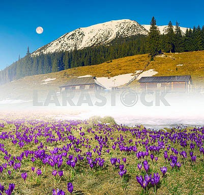 Flower farm Carpathian Mountains