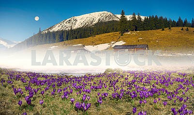 Flower farm Carpathian Mountains