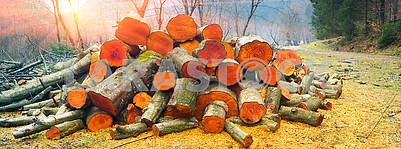 Picturesque composition of firewood