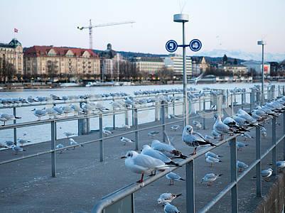 Чайки на набережной в Цюрихе