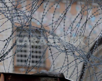 Колючая проволока на фоне тюремного окна