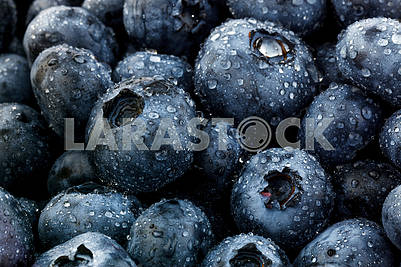 Blueberry Berries
