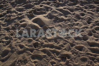 Утром люди затоптали песок на берегу Средиземного моря