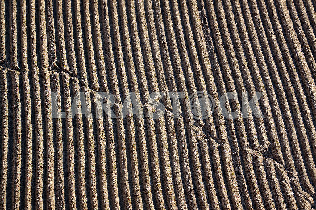 Cleaned by a tractor sand on the Mediterranean beach — Image 68955