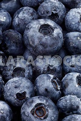 Blueberry Berries