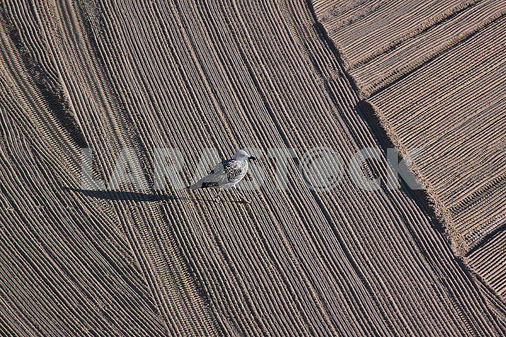 Lonely seagull on cleaned by a tractor sand on the Mediterranean — Image 69022