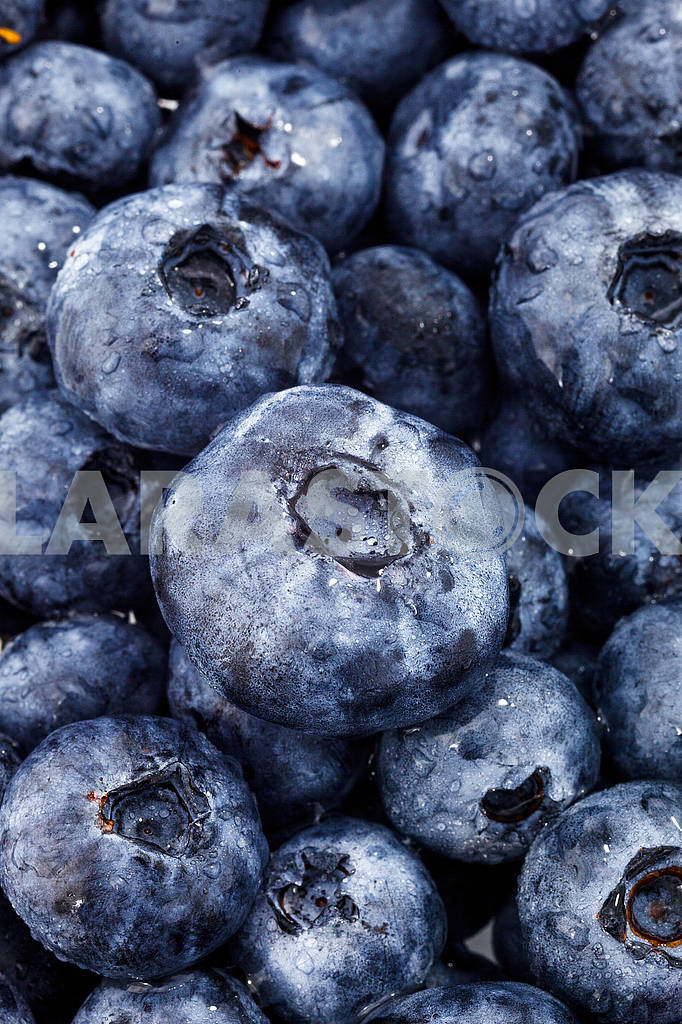 Blueberry — Image 69089