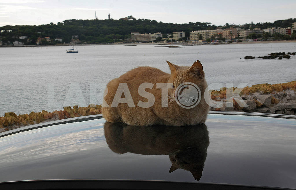 The red cat rests on the roof of the car — Image 69099