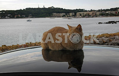 The red cat rests on the roof of the car