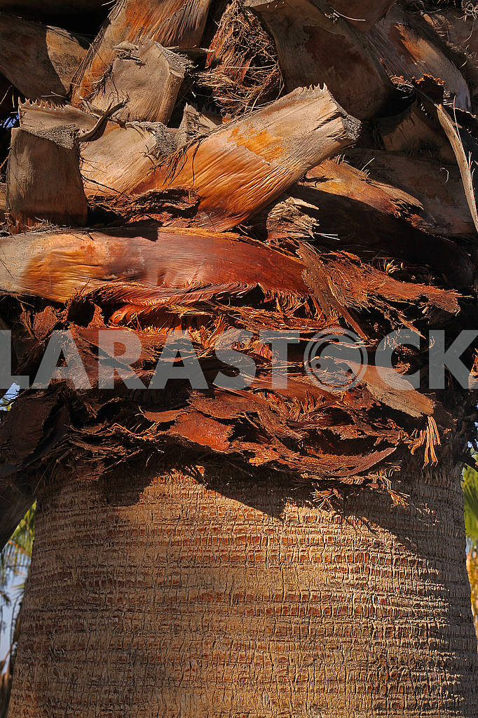 The trunk of an old palm tree — Image 69323