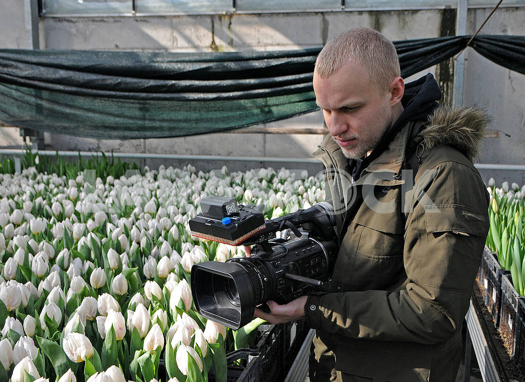 Tulips — Image 69529