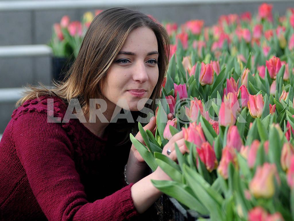 Tulips — Image 69535